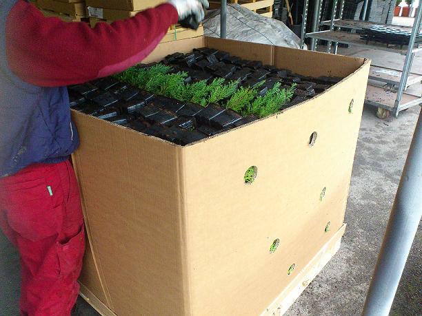 Embalado de planta